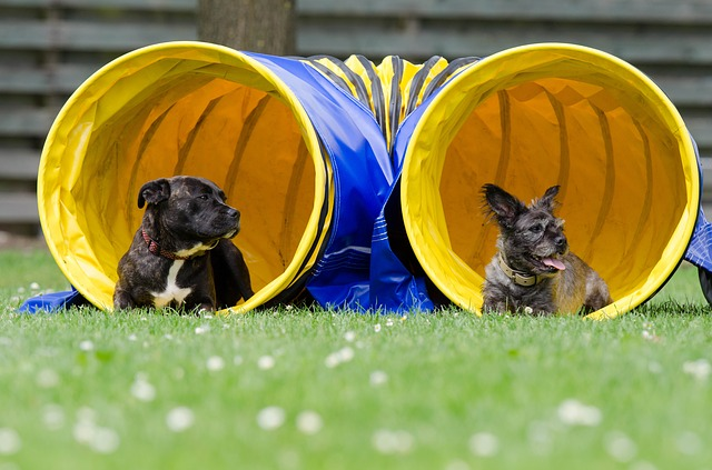 dogs in tunnel