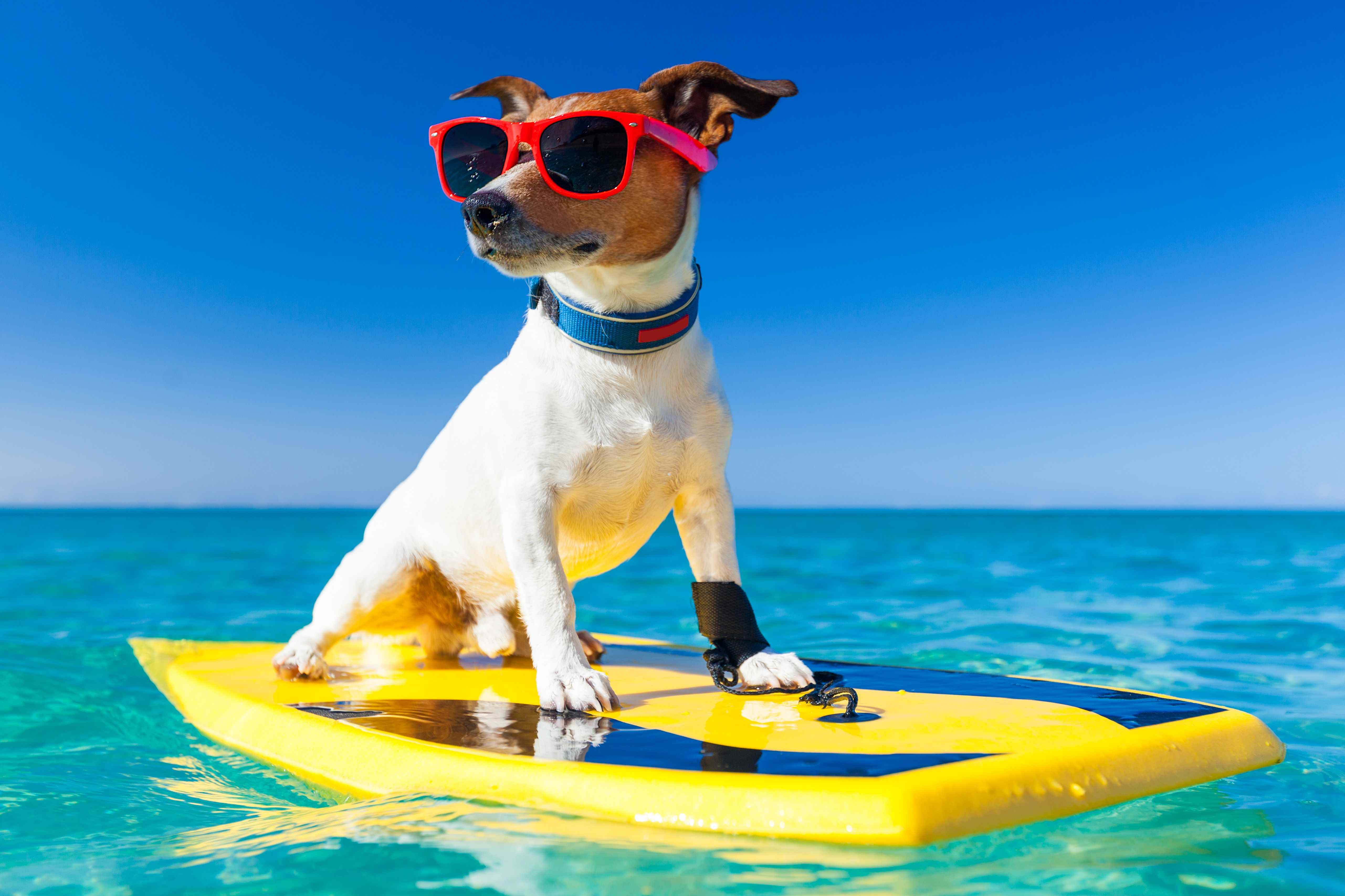 Top Pet Friendly Holidays In The Uk For National Pet Month Everypaw